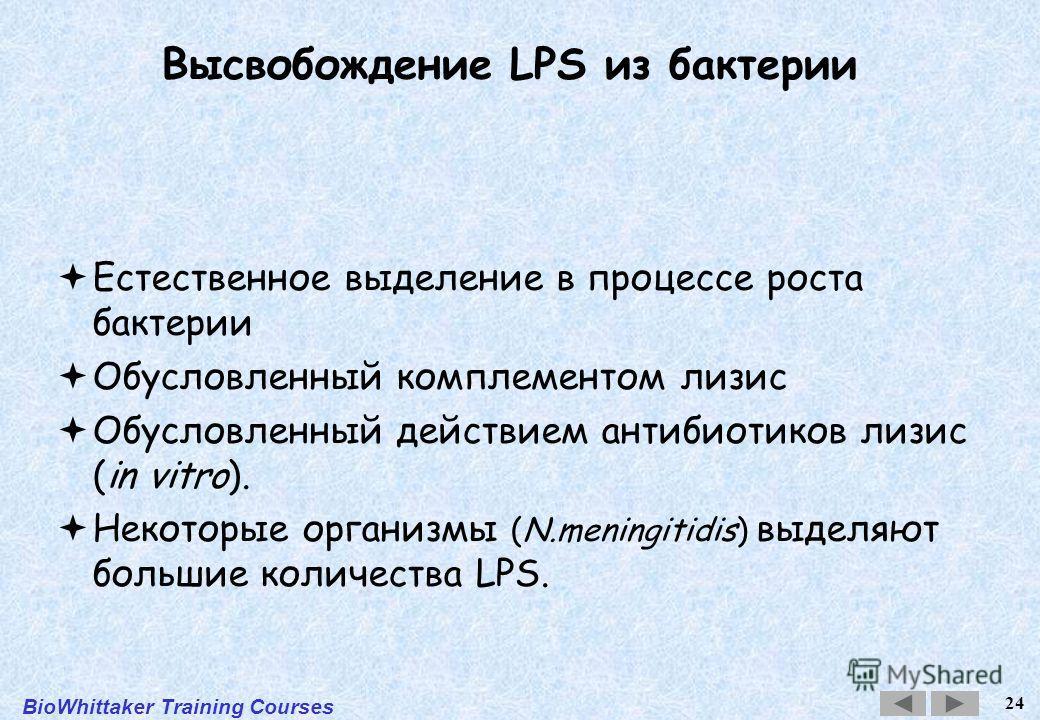 BioWhittaker Training Courses 24 Высвобождение LPS из бактерии Естественное выделение в процессе роста бактерии Обусловленный комплементом лизис Обусловленный действием антибиотиков лизис (in vitro). Некоторые организмы (N.meningitidis) выделяют боль
