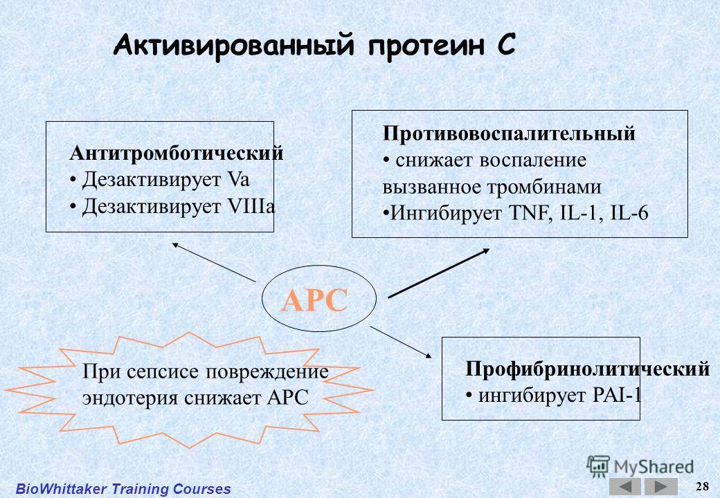 BioWhittaker Training Courses 28 APC Антитромботический Дезактивирует Va Дезактивирует VIIIa Противовоспалительный снижает воспаление вызванное тромбинами Ингибирует TNF, IL-1, IL-6 Профибринолитический ингибирует PAI-1 При сепсисе повреждение эндоте