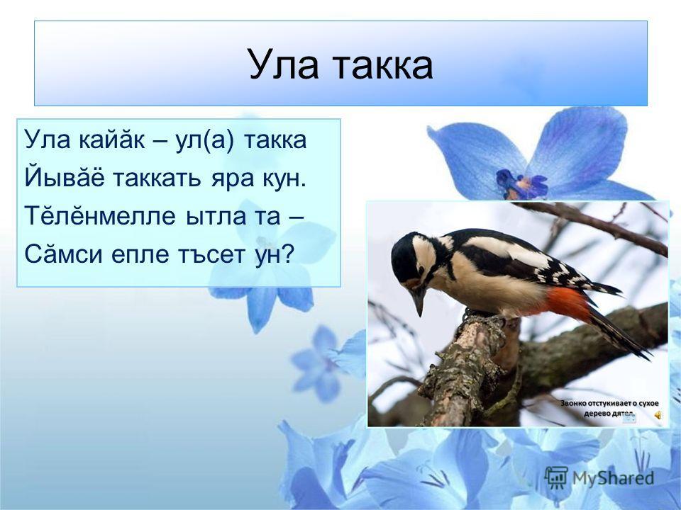 Ула такка Ула кайăк – ул(а) такка Йывăё таккать яра кун. Тĕлĕнмелле ытла та – Сăмси епле тъсет ун?