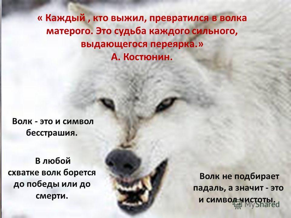 « Каждый, кто выжил, превратился в волка матерого. Это судьба каждого сильного, выдающегося переярка.» А. Костюнин. Волк - это и символ бесстрашия. В любой схватке волк борется до победы или до смерти. Волк не подбирает падаль, а значит - это и симво