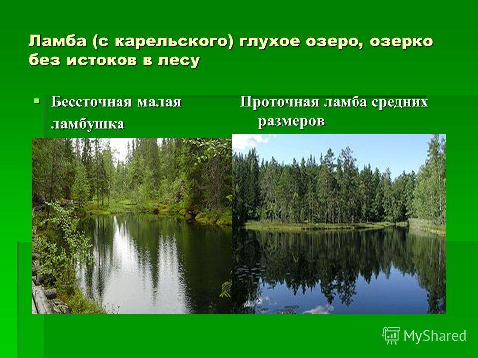 Ламба (с карельского) глухое озеро, озерко без истоков в лесу Бессточная малая ламбушка Бессточная малая ламбушка Проточная ламба средних размеров
