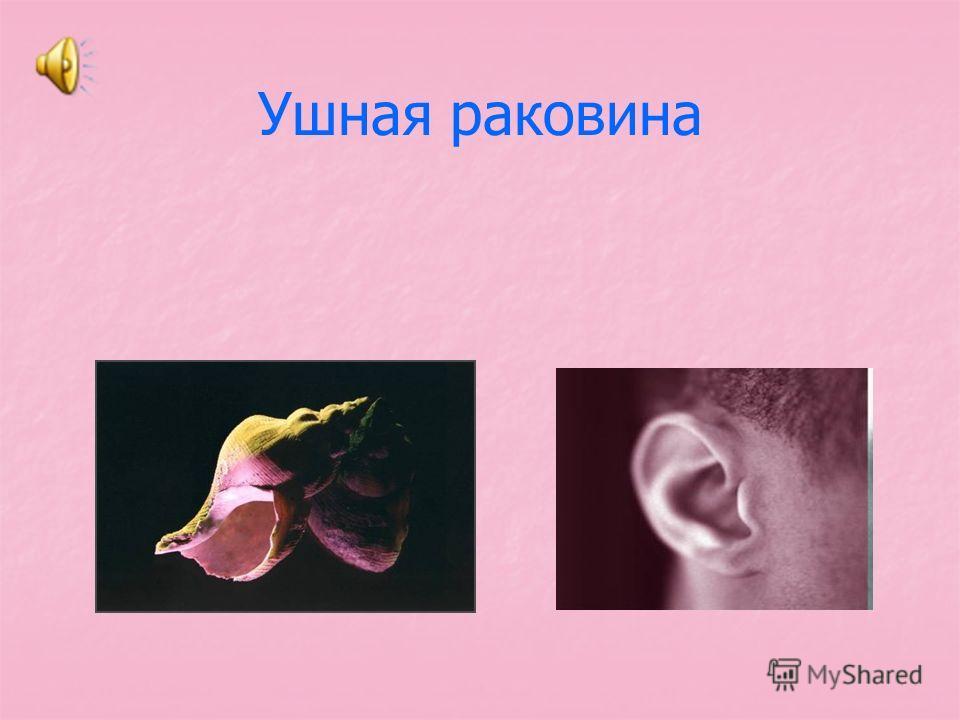 Ушная раковина