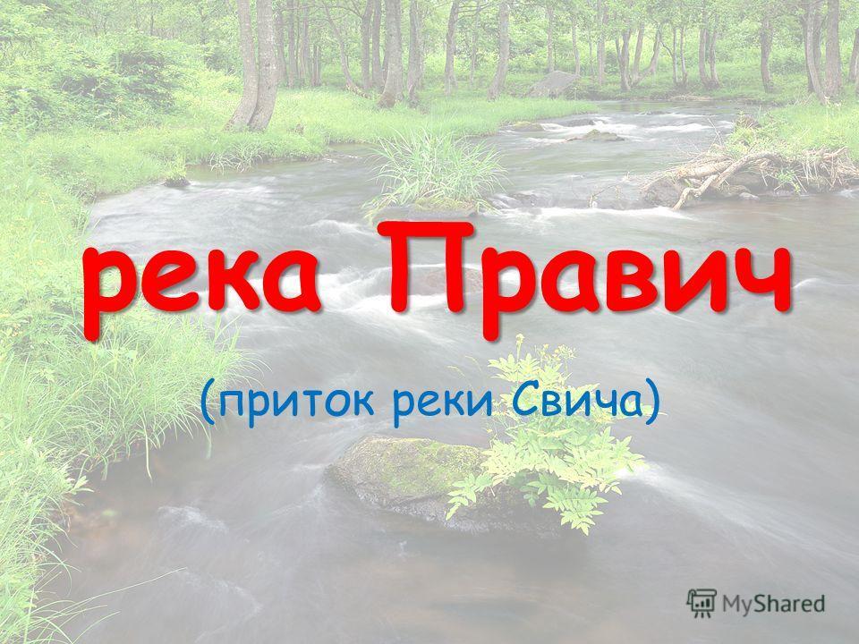 река Правич (приток реки Свича)