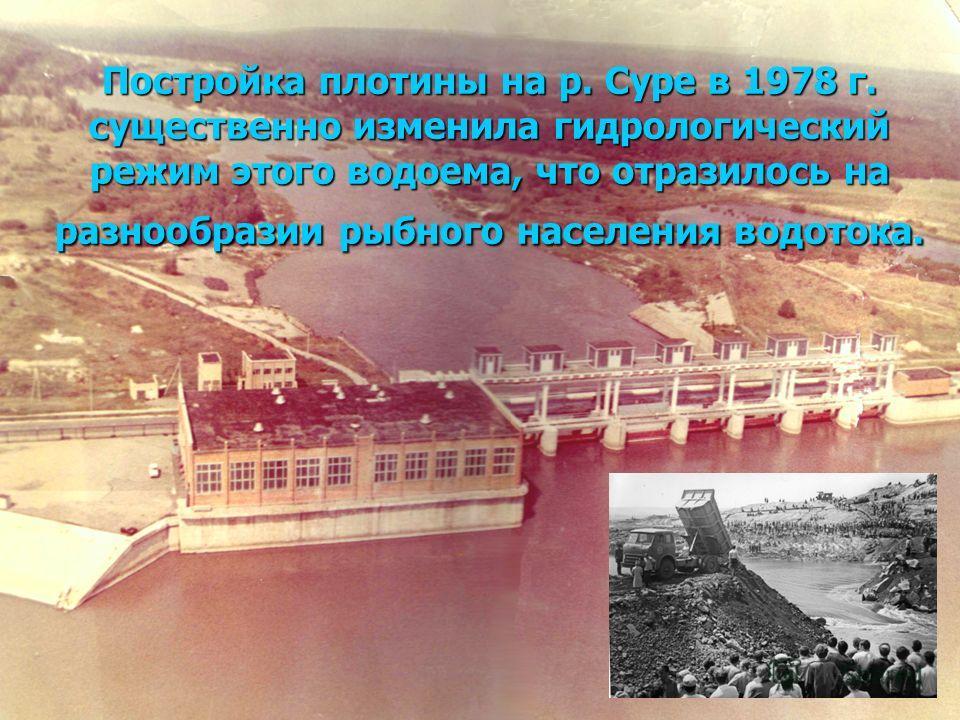 Постройка плотины на р. Суре в 1978 г. существенно изменила гидрологический режим этого водоема, что отразилось на разнообразии рыбного населения водотока.