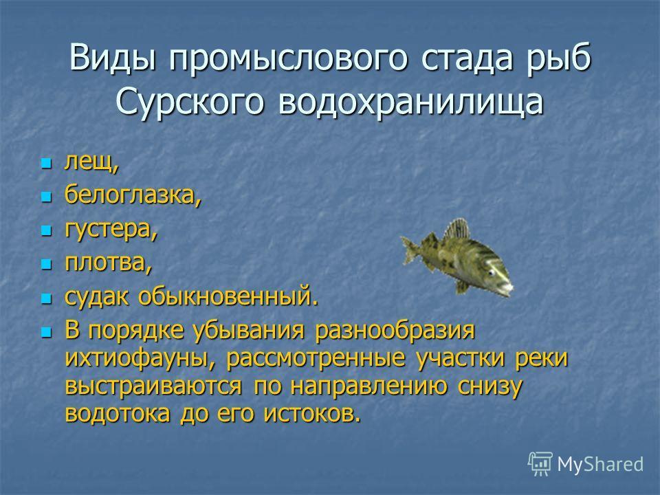 Виды промыслового стада рыб Сурского водохранилища лещ, лещ, белоглазка, белоглазка, густера, густера, плотва, плотва, судак обыкновенный. судак обыкновенный. В порядке убывания разнообразия ихтиофауны, рассмотренные участки реки выстраиваются по нап