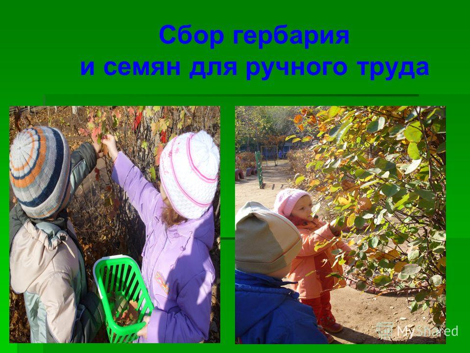 Сбор гербария и семян для ручного труда