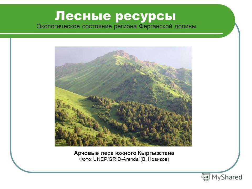 Лесные ресурсы Экологическое состояние региона Ферганской долины Арчовые леса южного Кыргызстана Фото: UNEP/GRID-Arendal (В. Новиков)