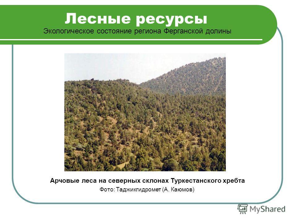Лесные ресурсы Экологическое состояние региона Ферганской долины Арчовые леса на северных склонах Туркестанского хребта Фото: Таджикгидромет (А. Каюмов)