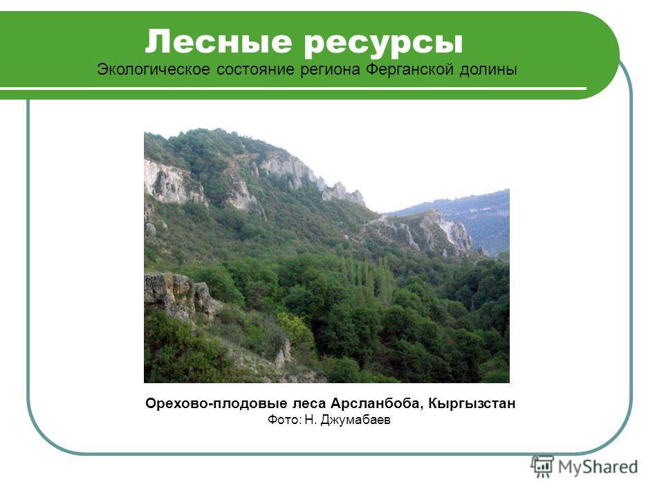 Лесные ресурсы Экологическое состояние региона Ферганской долины Орехово-плодовые леса Арсланбоба, Кыргызстан Фото: Н. Джумабаев