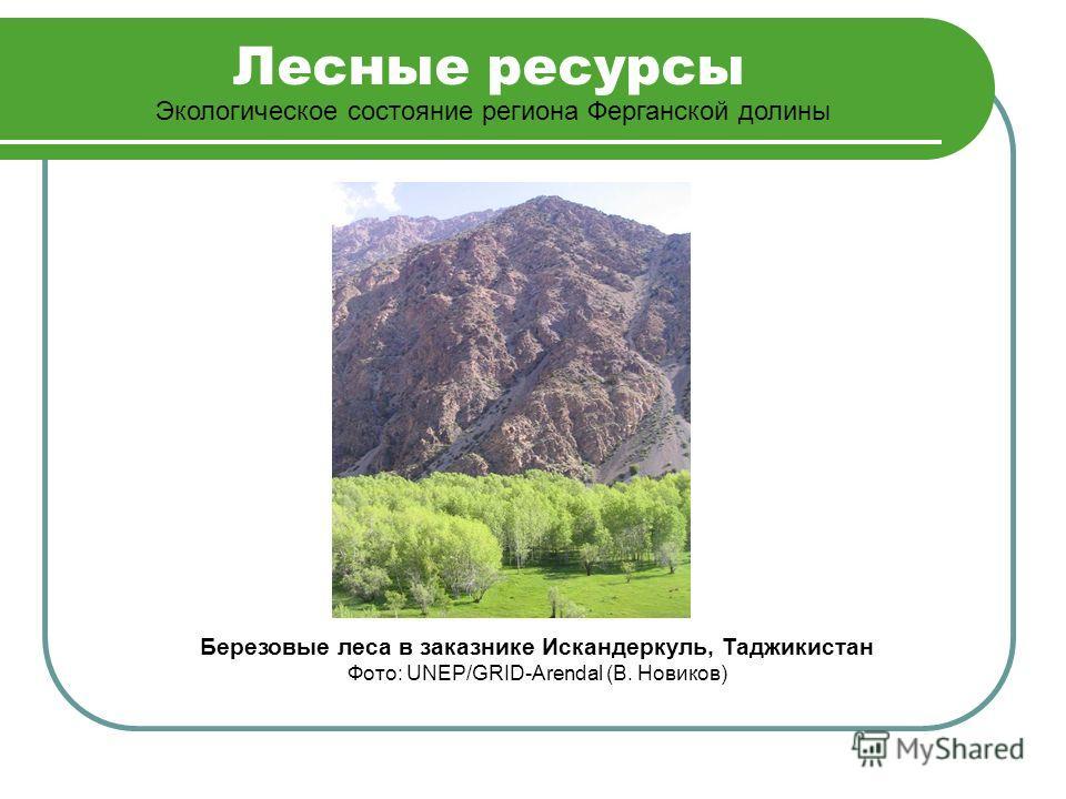 Лесные ресурсы Экологическое состояние региона Ферганской долины Березовые леса в заказнике Искандеркуль, Таджикистан Фото: UNEP/GRID-Arendal (В. Новиков)