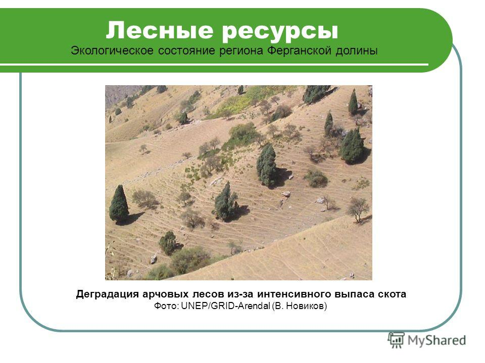 Лесные ресурсы Экологическое состояние региона Ферганской долины Деградация арчовых лесов из-за интенсивного выпаса скота Фото: UNEP/GRID-Arendal (В. Новиков)