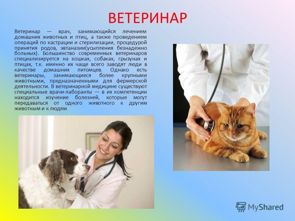 Ветеринар врач, занимающийся лечением домашних животных и птиц, а также проведением операций по кастрации и стерилизации, процедурой принятия родов, эвтаназии(усыпления безнадежно больных). Большинство современных ветеринаров специализируется на кошк