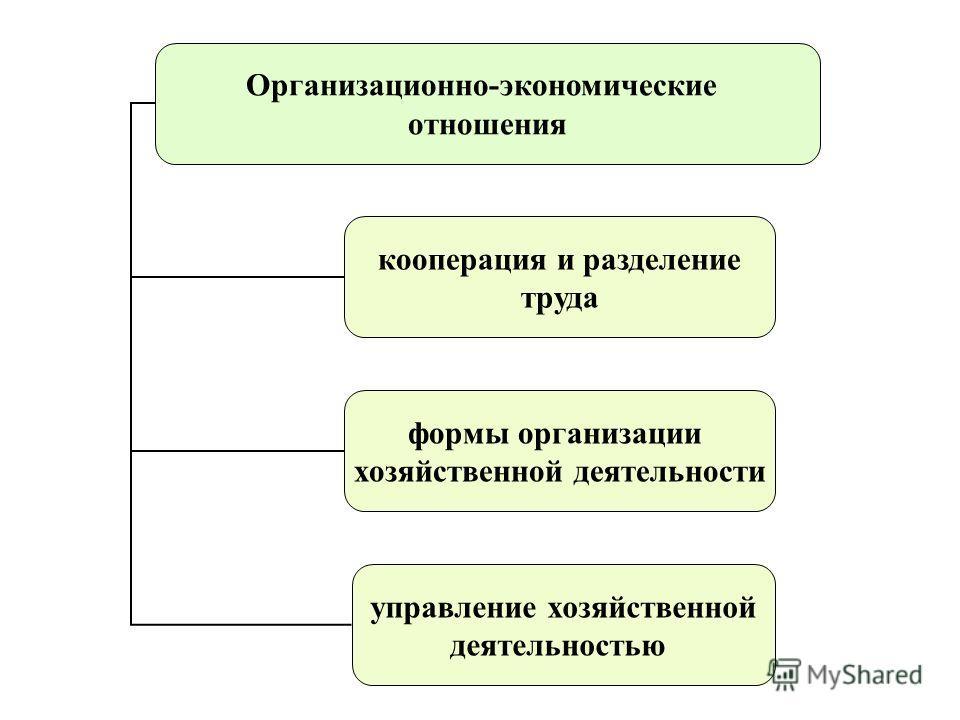 Организационно-экономические отношения кооперация и разделение труда формы организации хозяйственной деятельности управление хозяйственной деятельностью