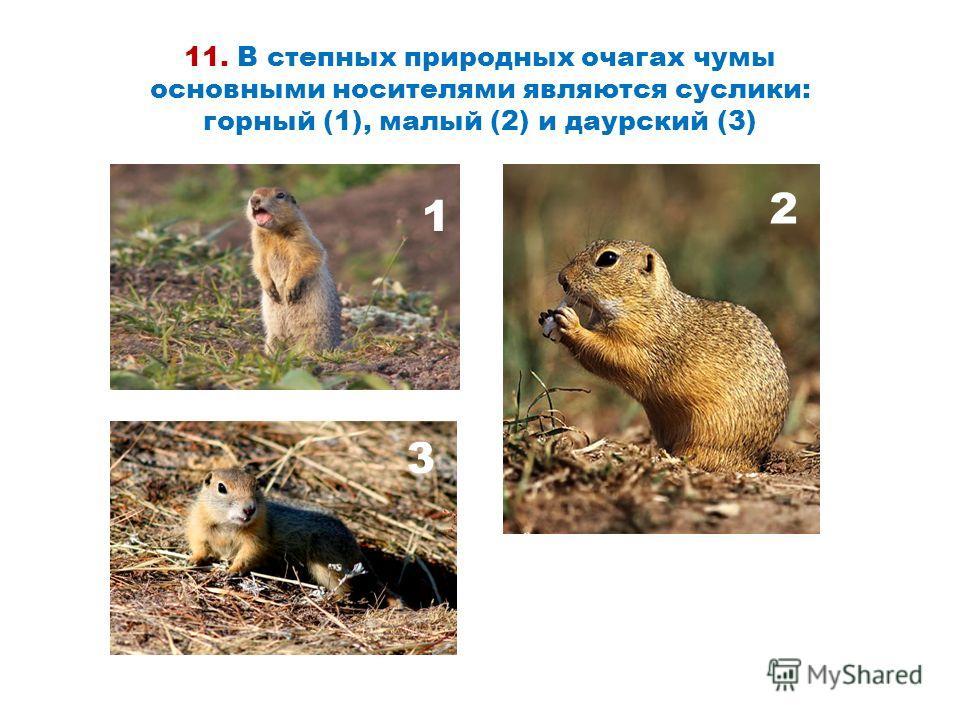 11. В степных природных очагах чумы основными носителями являются суслики: горный (1), малый (2) и даурский (3) 1 2 3 2 3