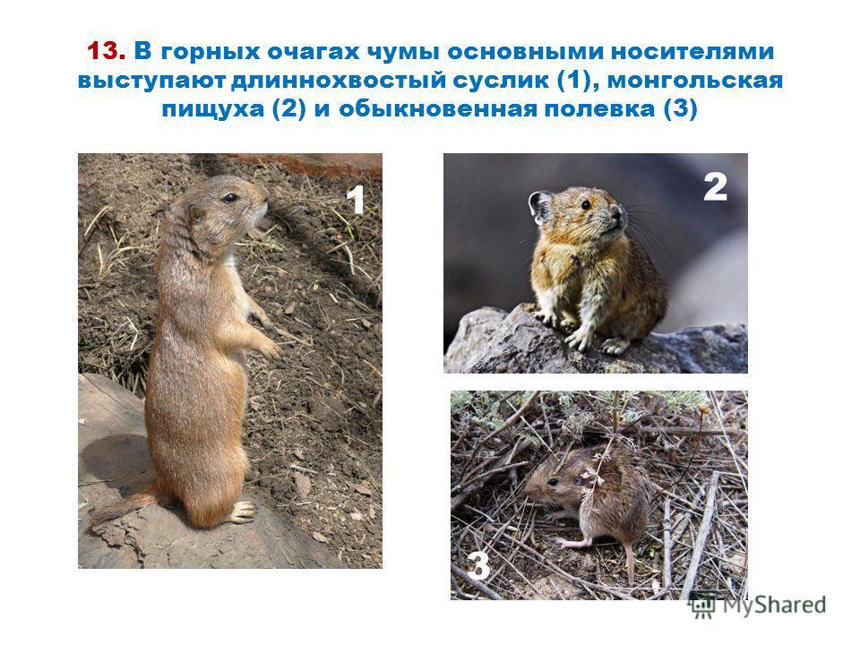 13. В горных очагах чумы основными носителями выступают длиннохвостый суслик (1), монгольская пищуха (2) и обыкновенная полевка (3) 1 2 3