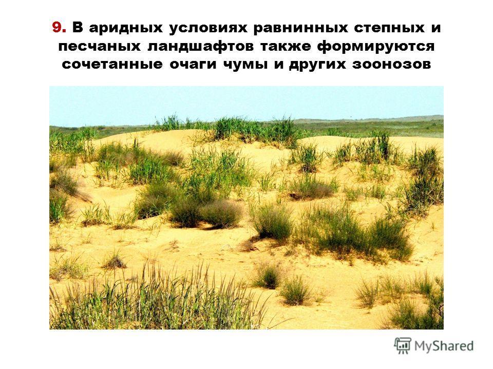 9. В аридных условиях равнинных степных и песчаных ландшафтов также формируются сочетанные очаги чумы и других зоонозов