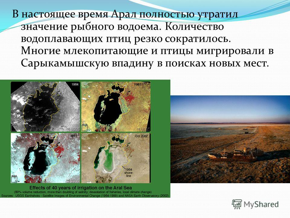 В настоящее время Арал полностью утратил значение рыбного водоема. Количество водоплавающих птиц резко сократилось. Многие млекопитающие и птицы мигрировали в Сарыкамышскую впадину в поисках новых мест.