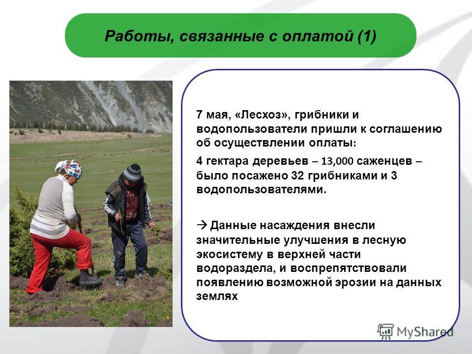 7 Работы, связанные с оплатой (1) 7 мая, «Лесхоз», грибники и водопользователи пришли к соглашению об осуществлении оплаты : 4 гектара деревьев – 13,000 саженцев – было посажено 32 грибниками и 3 водопользователями. Данные насаждения внесли значитель