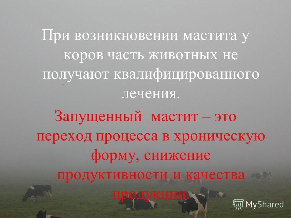 При возникновении мастита у коров часть животных не получают квалифицированного лечения. Запущенный мастит – это переход процесса в хроническую форму, снижение продуктивности и качества продукции.