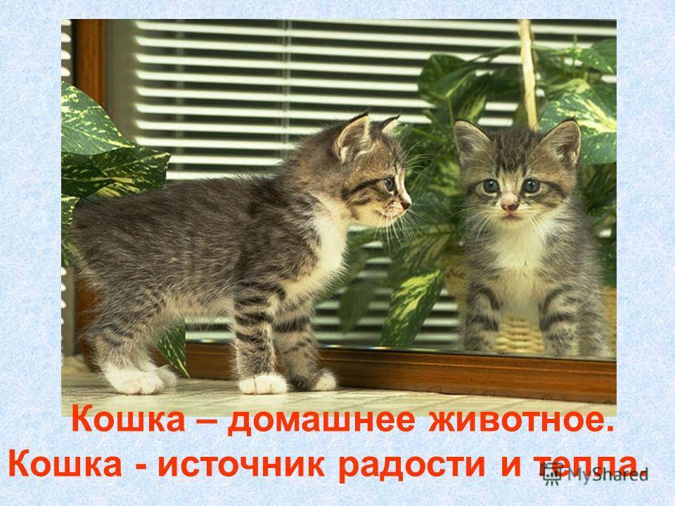 Наши выводы Кошка – домашнее животное. Кошка - источник радости и тепла.