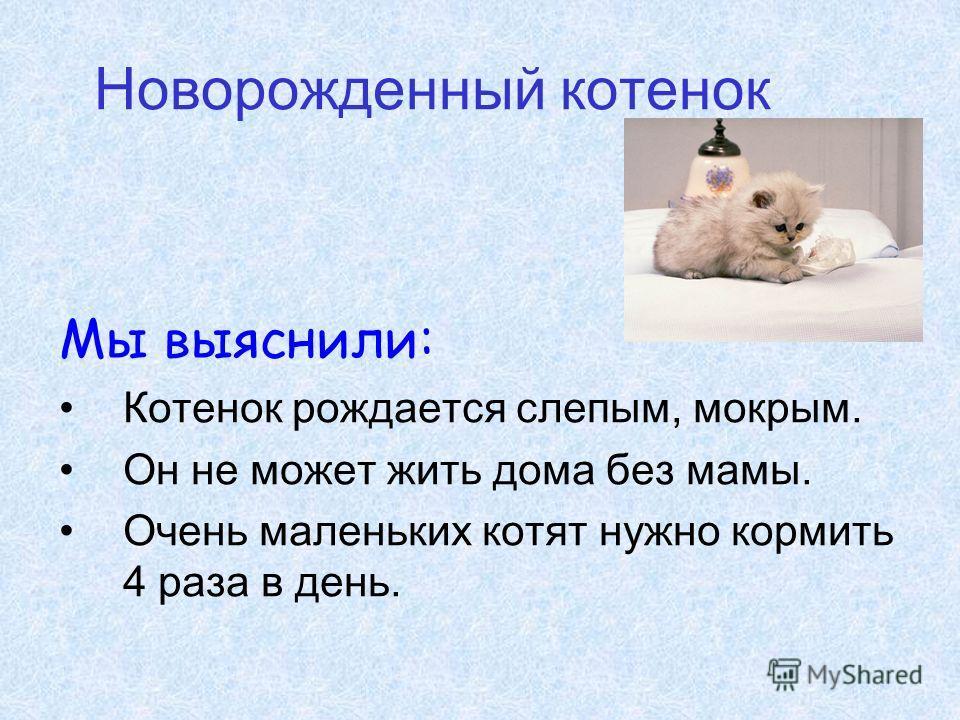 Новорожденный котенок Мы выяснили: Котенок рождается слепым, мокрым. Он не может жить дома без мамы. Очень маленьких котят нужно кормить 4 раза в день.