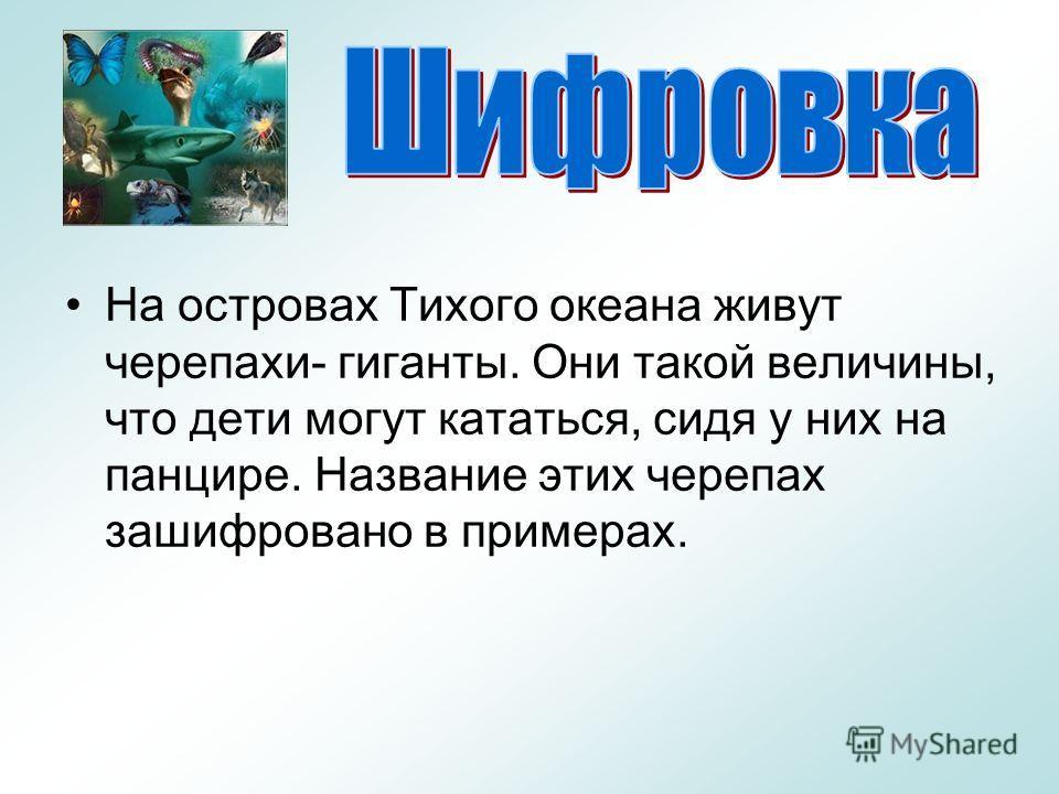 Презентация о Черепах скачать