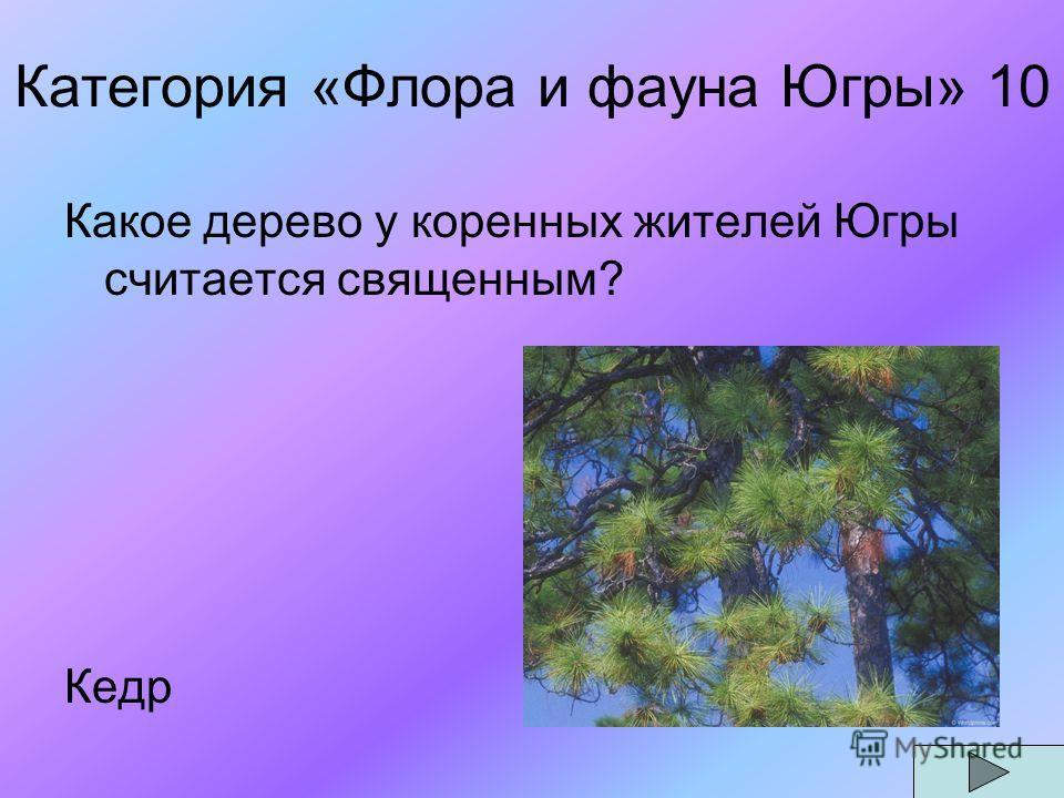 Категория «Флора и фауна Югры» 10 Какое дерево у коренных жителей Югры считается священным? Кедр