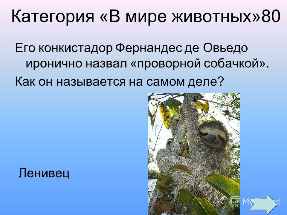 Категория «В мире животных»80 Его конкистадор Фернандес де Овьедо иронично назвал «проворной собачкой». Как он называется на самом деле? Ленивец