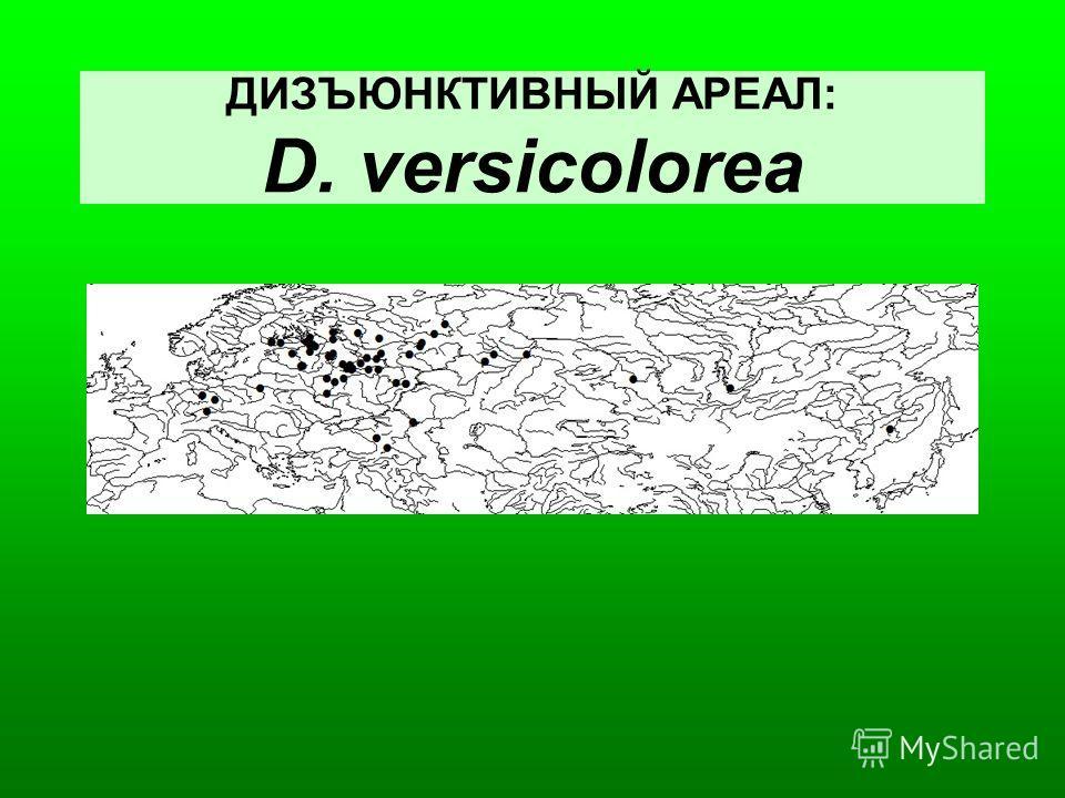 ДИЗЪЮНКТИВНЫЙ АРЕАЛ: D. versicolorea