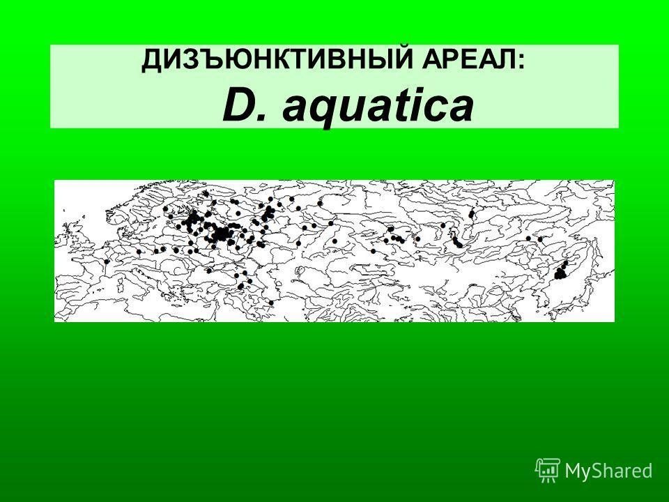 ДИЗЪЮНКТИВНЫЙ АРЕАЛ: D. aquatica