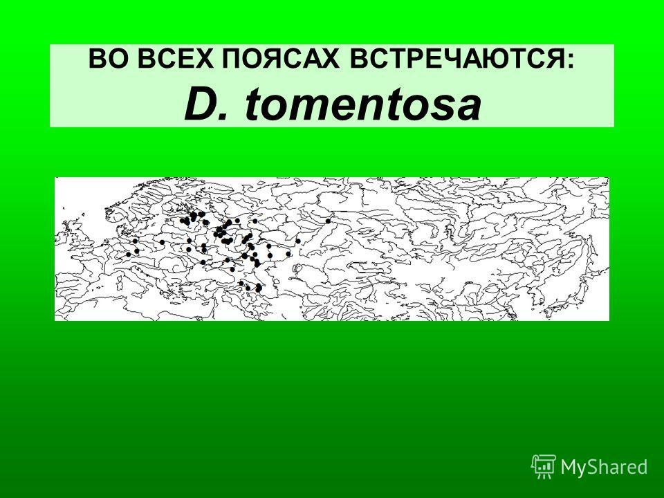 ВО ВСЕХ ПОЯСАХ ВСТРЕЧАЮТСЯ: D. tomentosa