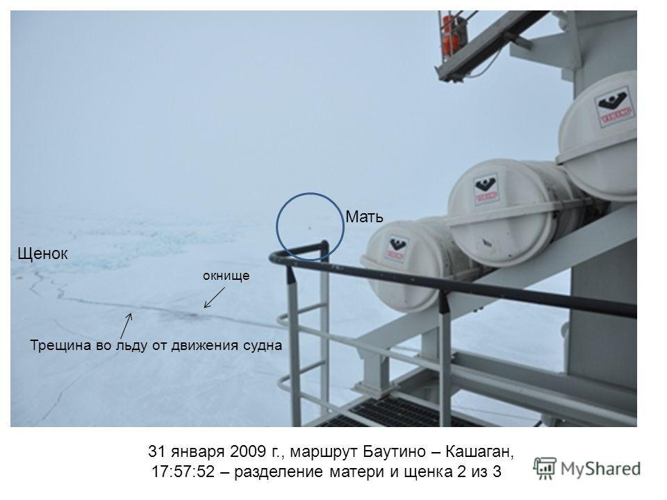 31 января 2009 г., маршрут Баутино – Кашаган, 17:57:52 – разделение матери и щенка 2 из 3 Мать Щенок Трещина во льду от движения судна окнище