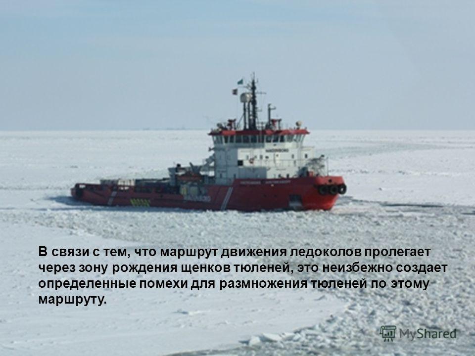 В связи с тем, что маршрут движения ледоколов пролегает через зону рождения щенков тюленей, это неизбежно создает определенные помехи для размножения тюленей по этому маршруту.