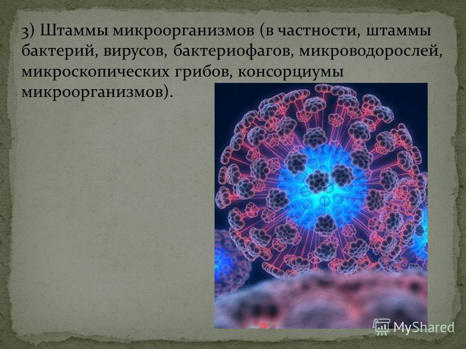 3) Штаммы микроорганизмов (в частности, штаммы бактерий, вирусов, бактериофагов, микроводорослей, микроскопических грибов, консорциумы микроорганизмов).