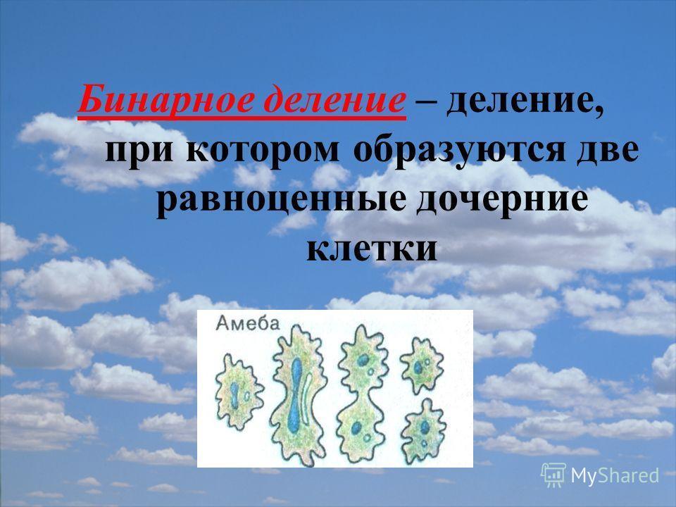 Бинарное деление – деление, при котором образуются две равноценные дочерние клетки