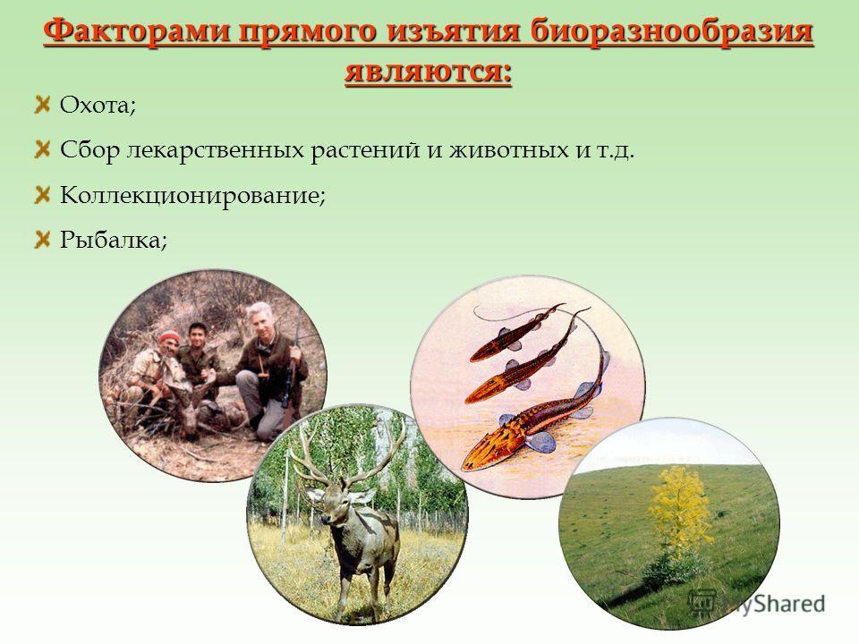 Факторами прямого изъятия биоразнообразия являются: Охота; Сбор лекарственных растений и животных и т.д. Коллекционирование; Рыбалка;
