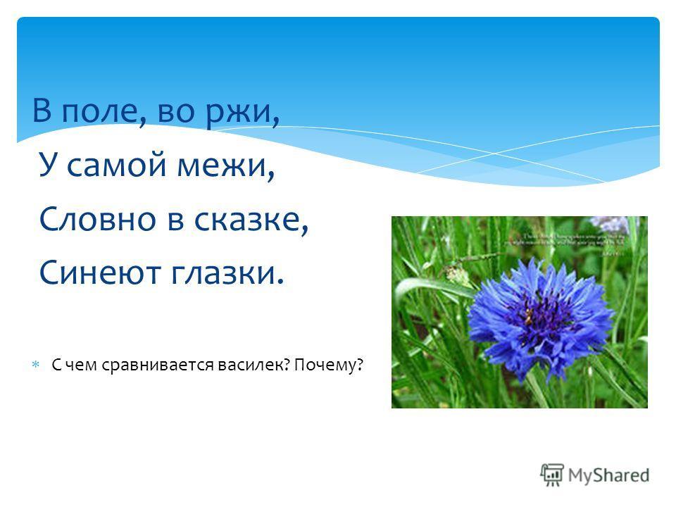 В поле, во ржи, У самой межи, Словно в сказке, Синеют глазки. С чем сравнивается василек? Почему?