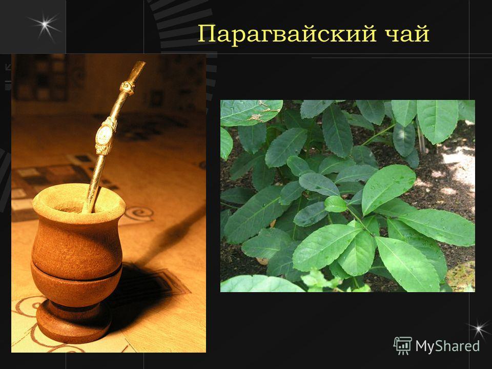Парагвайский чай