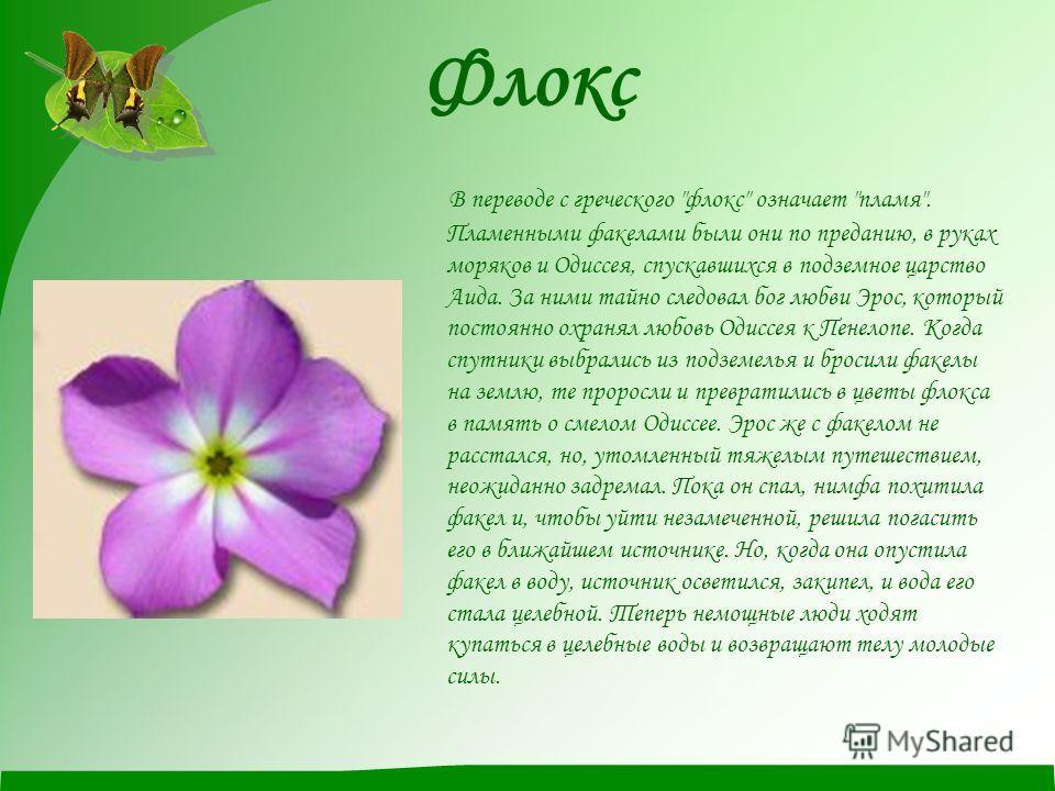 Флокс В переводе с греческого