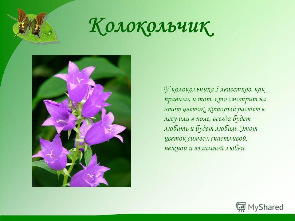 Колокольчик У колокольчика 5 лепестков, как правило, и тот, кто смотрит на этот цветок, который растет в лесу или в поле, всегда будет любить и будет любим. Этот цветок символ счастливой, нежной и взаимной любви.