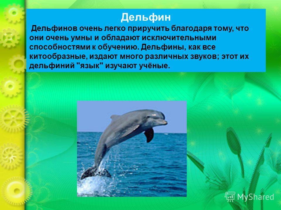 Дельфин Дельфинов очень легко приручить благодаря тому, что они очень умны и обладают исключительными способностями к обучению. Дельфины, как все китообразные, издают много различных звуков; этот их дельфиний язык изучают учёные.