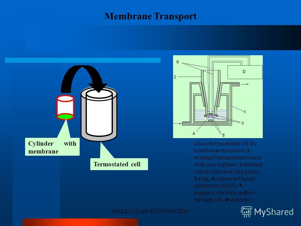 MOLECULAR RECOGNITION6 Cylinder with membrane Termostated cell Glass thermostated cell for membrane extraction: 1- external thermostated vessel with source phase; 2-internal vessel with receiving phase; 3-ring; 4-supported liquid membrane (SLM); 5- m