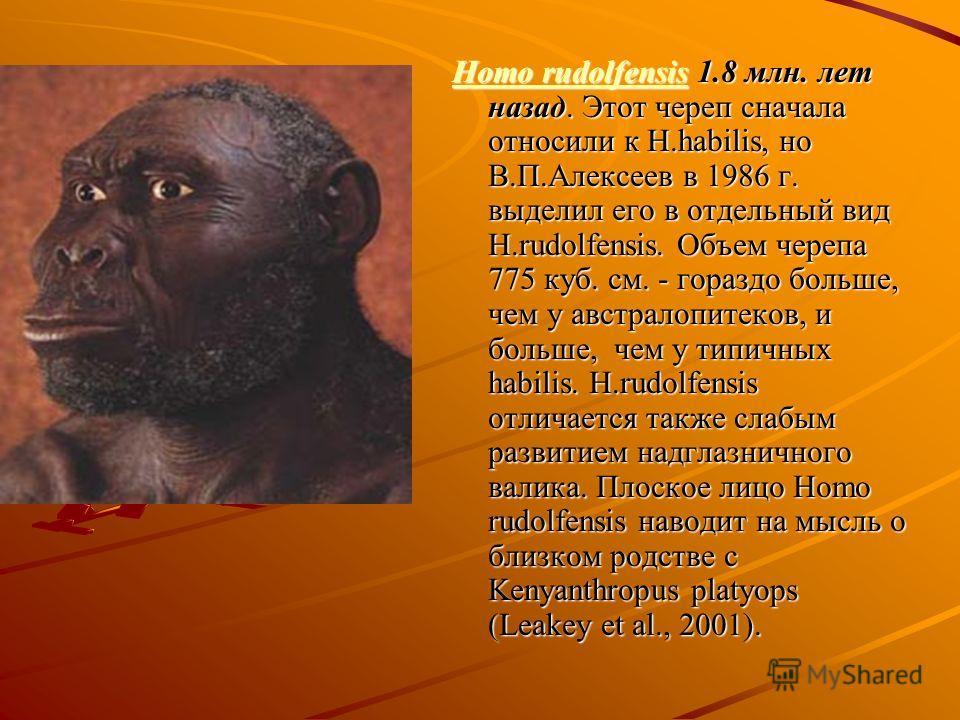 Homo rudolfensisHomo rudolfensis 1.8 млн. лет назад. Этот череп сначала относили к H.habilis, но В.П.Алексеев в 1986 г. выделил его в отдельный вид H.rudolfensis. Объем черепа 775 куб. см. - гораздо больше, чем у австралопитеков, и больше, чем у типи