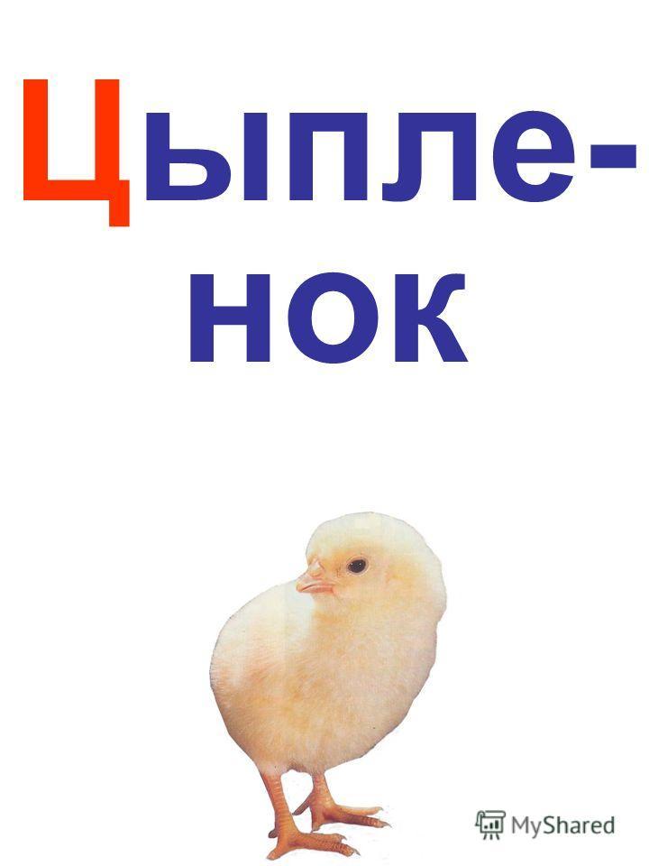 Цыпле- нок