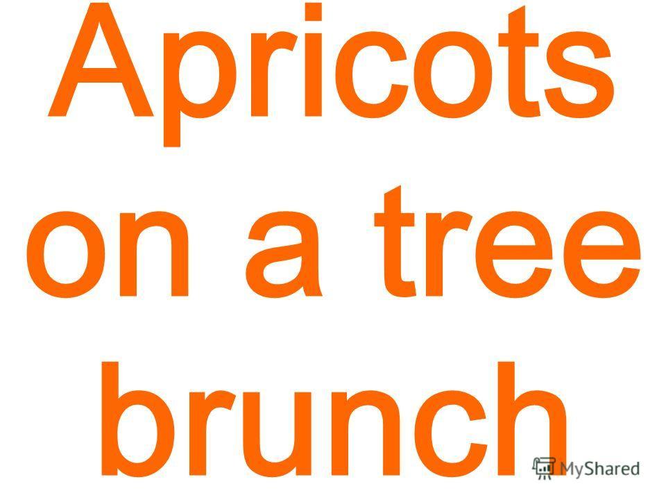 Apricots on a tree brunch