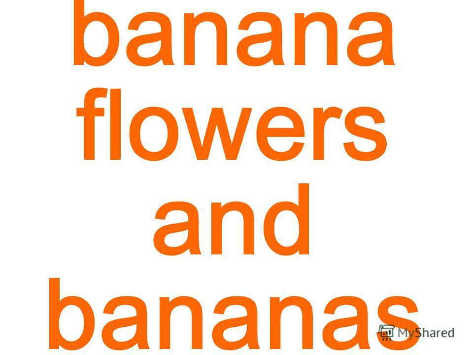 banana flowers and bananas