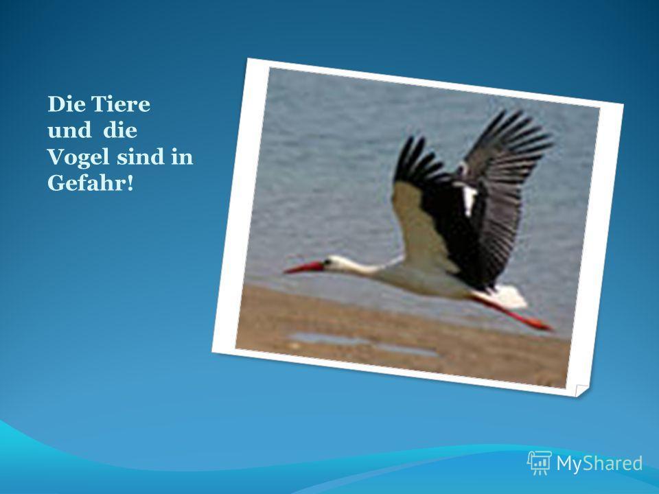Die Tiere und die Vogel sind in Gefahr!