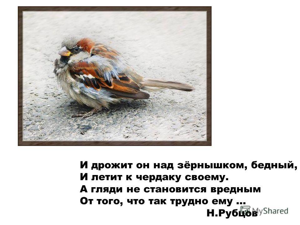 И дрожит он над зёрнышком, бедный, И летит к чердаку своему. А гляди не становится вредным От того, что так трудно ему … Н.Рубцов