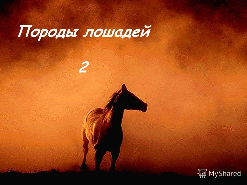 Породы лошадей 2