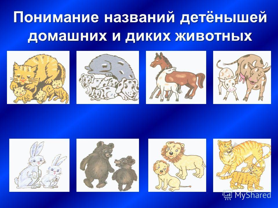 Понимание названий детёнышей домашних и диких животных